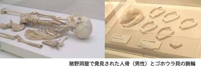 猪目洞窟 人体骨 ごほうら貝腕輪